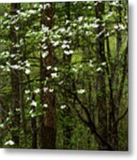 Dogwood Blooming In Forest Metal Print