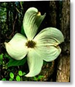 Dogwood Blossom I Metal Print by Julie Dant