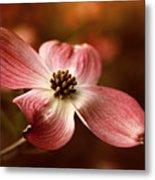 Dogwood Blossom Metal Print