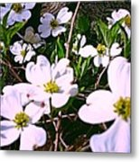 Dogwood Blossoms Pair Up Metal Print