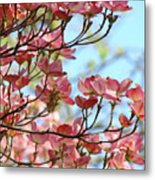 Dogwood Flowering Trees Pink Dogwood Flowers Baslee Troutman Metal Print