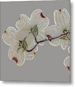 Dogwood Flowers 3 Metal Print