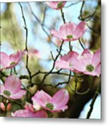 Dogwood Flowers Pink Dogwood Tree Landscape 9 Giclee Art Prints Baslee Troutman Metal Print