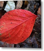 Dogwood Leaf Metal Print