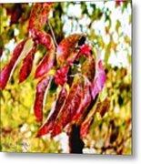 Dogwood Leaves Metal Print