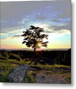 Dogwood On Little Round Top Metal Print