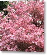 Dogwood Tree Flowers Art Prints Canvas Pink Dogwood Metal Print