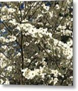 Dogwoods In Bloom Metal Print