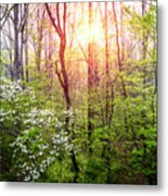Dogwoods In The Forest Metal Print