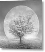 Dogwoods In The Moon Black And White Metal Print
