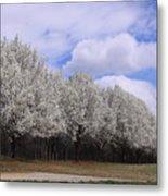Bradford Pear Trees On Display Metal Print