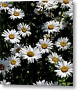 Dollop Of Daises Metal Print