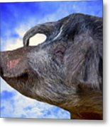 Dolly Under The Smiling Moon Metal Print