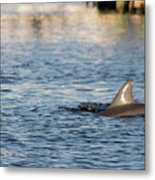 Dolphin By The Dock Metal Print