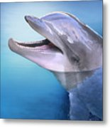 Dolphin In The Moonlight Metal Print