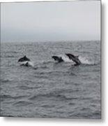 Dolphin Joy 2 Metal Print