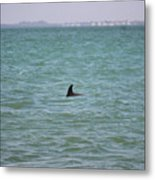 Dolphin Makes An Appearance Metal Print