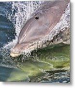 Dolphin Pair Metal Print