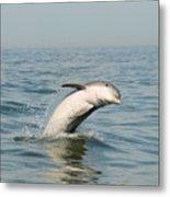 Dolphin Splash Metal Print
