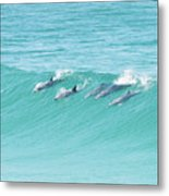 Dolphin Team Metal Print
