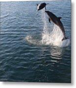 Dolphin Watch Metal Print