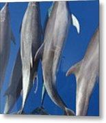 Dolphin2 Metal Print