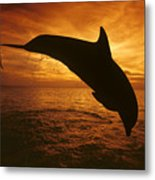 Dolphins And Sunset Metal Print