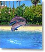 Dolphins Dance Metal Print