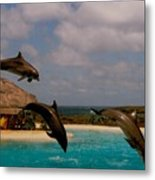 Dolphins Fly Metal Print