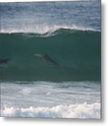 Dolphins Surfing The Waves Metal Print
