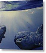 Dolphins Underwater Game Metal Print
