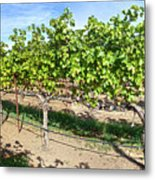 Domaine Chandon Panorama Metal Print