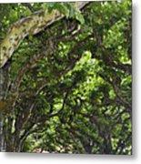 Dome Of Trees Metal Print