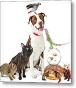 Domestic Pets Group Together With Copy Space Metal Print
