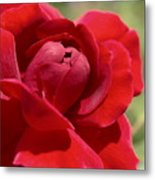 Dominica Red Rose Metal Print