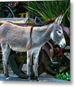 Donkey And Old Tractor Metal Print