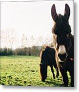 Donkey And Pony Metal Print