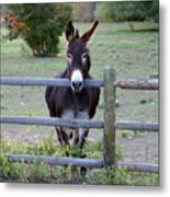 Donkey At The Fence Metal Print