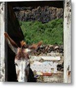 Donkey At The Window Metal Print