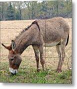 Donkey Finds Greener Grass Metal Print