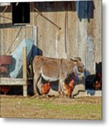 Donkey Goat And Chickens Metal Print