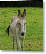 Donkey On A Farm Metal Print