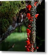 Donkey Tail Blossoms Metal Print