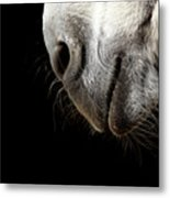 Donkey's Mouth Metal Print