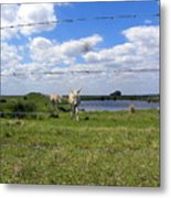 Don't Fence Me In Metal Print