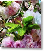 Double Cherry Blossoms Metal Print