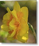 Double Daffodil Metal Print