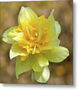 Double Headed Daffodil Metal Print