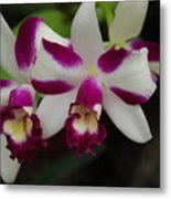 Double Orchid Metal Print