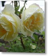 Double Rainy Rose Metal Print